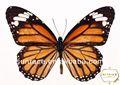 Thời trang áo lông thủ công Butterfly