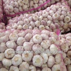 2013 New crop China farm fresh garlic