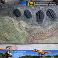 Mi dino- prehistóricos marroquíes juego de dinosaurios fósiles trilobites para la venta