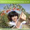 Best seller Size 350 Ningxia Dried Goji berries