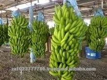 Green Fresh Cavandish Banana GRADE a FOR SALE HOT SALES