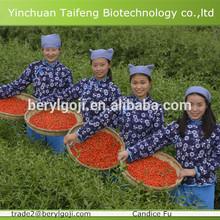 2014 certified organic goji berry