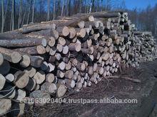 ASPEN (Populus Tremula) Saw Logs