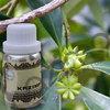 Fragrance Essential oils | Tea Tree Essential oil