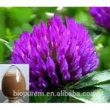 Red Clover extract,8-,40%isoflavones
