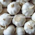 2014 china ajo fresco blanco puro 45-50 50-55 55-60