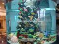 اسطوانة الاكريليك حوض للأسماك، حوض للأسماك الزينة المستوردة