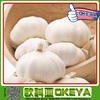 2014 chinese fresh pure white garlic