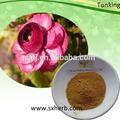 Anti cancro rhodiola rosea estratto/salidrosides3% rhodiola rosea compresse