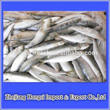 Preço de fábrica de peixe congelado sardinha/peixe sardinha nome científico/sardinha congelados para a isca