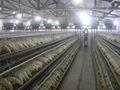 Frd- china buen precio de aves de corral jaulas de pollo para granja de pollos
