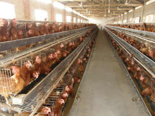 High Quality A Type Multi-tier Layer Chicken Cage For Sale