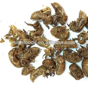Chan tui Cicada slough Chinese herb medicine Animal herb Periostracum cicada