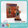 البلاستيك تفنيات عن تشريح جسم الإنسان النموذجي