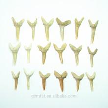 naturale denti di squalo e denti di squalo fossili per ciondolo