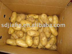 Chinese fresh potato,2014 new crop,hot sale!!!