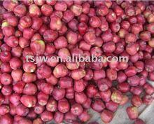red huaniu apple fruit