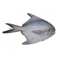 GRADE A Whole Round Frozen Golden/Black/silver Pomfret Fish Pomfret Fish