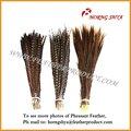 natural de cola de faisán pluma de faisán