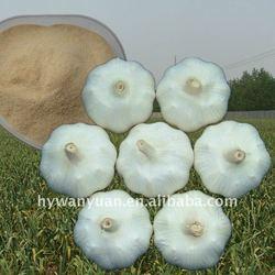 New crop! normal white garlic price