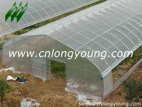 Economical Singel Plastic Tunnel Green House