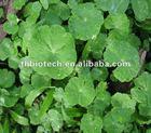 Pure Natural Gotu Kola Extract /Triterpenes, asiatic acid