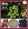 Saponin Soapnut extract powder furostanolic saponins