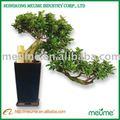 venta al por mayor singular ficus bonsái árbol de planta de interior