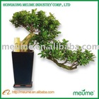 Unique wholesale ficus bonsai tree indoor plant