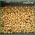 Graines de plantes tropicales cycas revoluta cycas revoluta graines, shelled frais