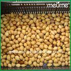 Seeds Cycas revoluta Tropical plants Fresh shelled cycas revoluta seeds