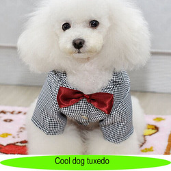 Pet dog boy tuxedo, high quality dog evening suit with red bow tie