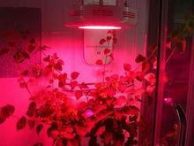 Greenhouse plants growth/90w ufo led grow light