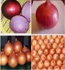 2014 fresh onions