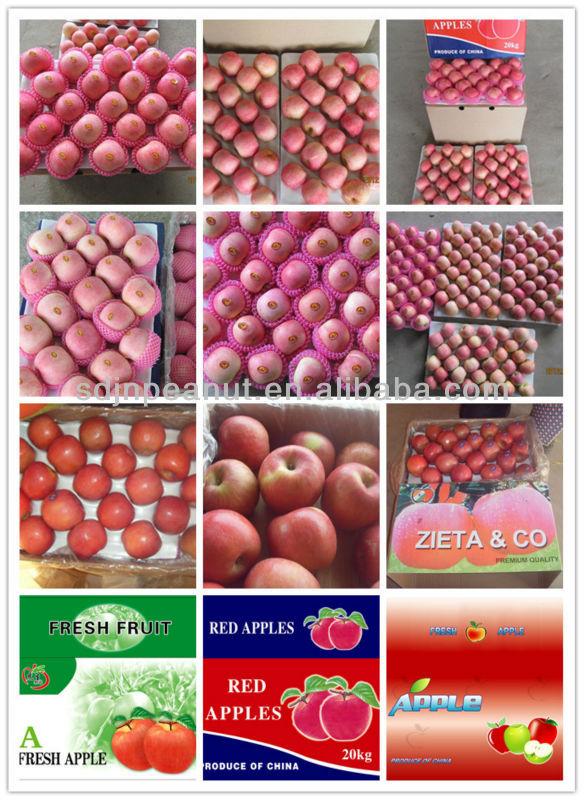 2012 fresh red fuji apple
