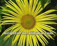 High quality Inula racemosa 10:1