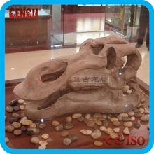 Indoor fossil museum simulation dinosaur fossil