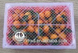 fresh sweet kino (mandarin orange)