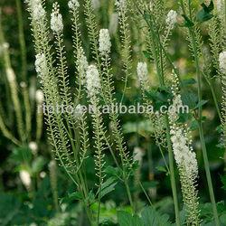 Black Cohosh Extract,Triterpene Glycosides 2.5% -20%