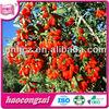 Dried Goji Berry with high quality original Chinese Ninxia Province