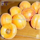 iqf fruit