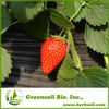 2014 Hot sales strawberry seeds for cultivating