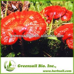 2014 OEM Softgel CO2 supercritical reishi/ganoderma spore oil