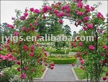 Metal garden wrought iron rose arch