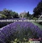 Lavender balance and anti-allergy hydrosol