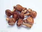 bulk fresh shiitake mushroom