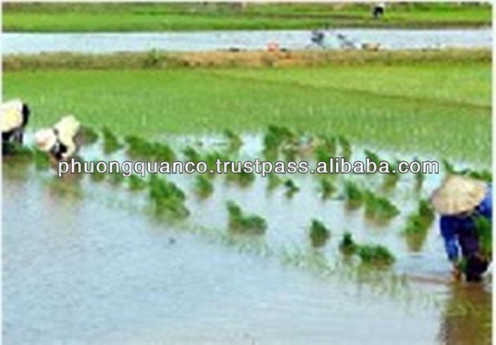 Cheapest-Newest crop Vietnamese Jasmine rice 5% broken