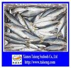2014 BQF of Frozen whole round pacific mackerel