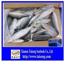 Frozen fresh ocean seafoods pacific Mackerel fish