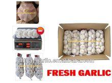 """2014 China Normal White Garlic & Pure White Garlic"" - hot sales, Eu Quality"